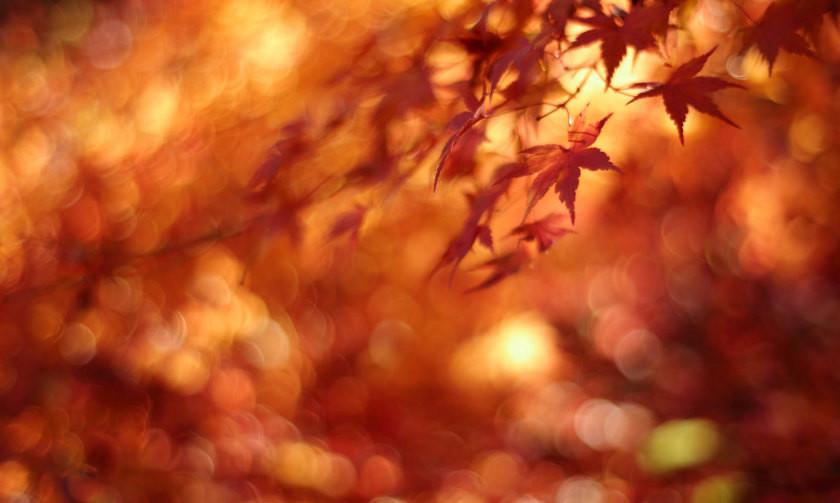 Aitumn leaves