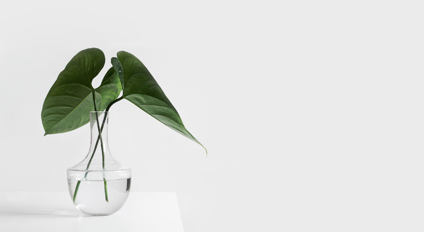 Two simple leaves in a glass vase on a white table