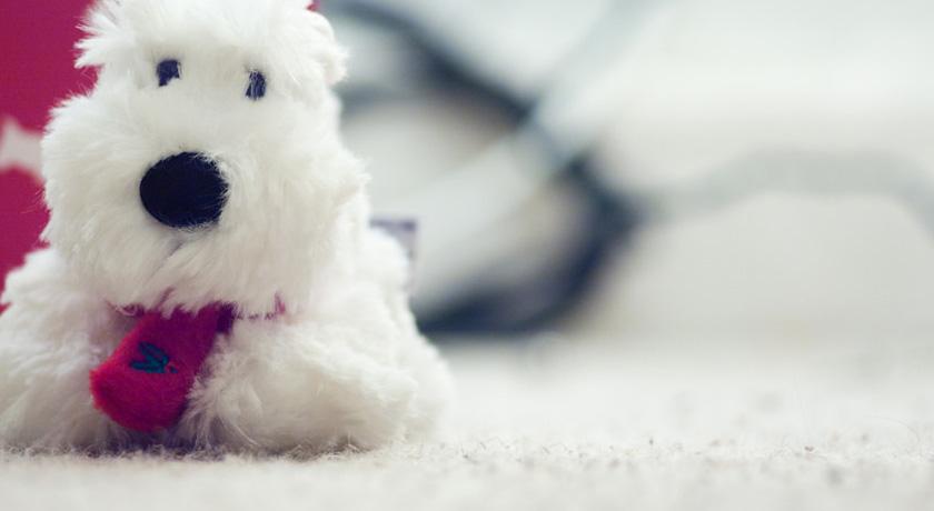Puppy toy